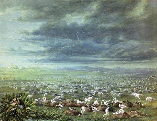 Emboscada a flamingos